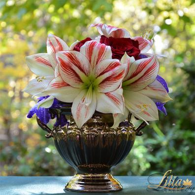 Amaryllis Arrangement with roses and orchids Vanda